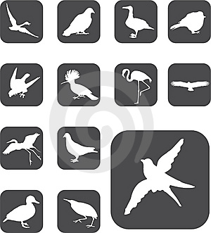 Set Buttons - 52_F. Birds Stock Photography - Image: 6168232