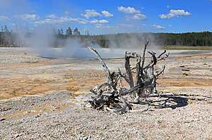 Lower Geyser Basin In Yellowstone Royalty Free Stock Image - Image: 6169036