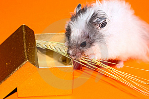 Free Stock Image - Christmas's gift for curiosity hamster