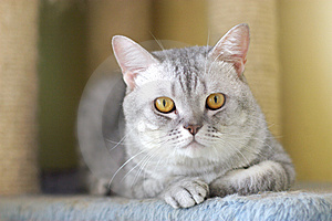 Cute Cat Stock Photography - Image: 6181542
