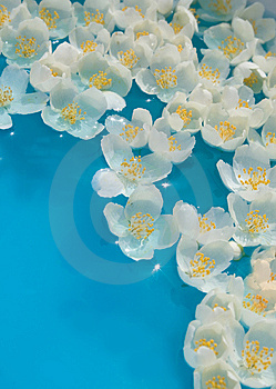 Unusual Water Flowers Royalty Free Stock Photo - Image: 6184295