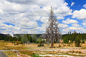 Upper Geyser Basin In Yellowstone Stock Images - Image: 6191264