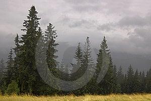 Fog in Zakopane Stock Image