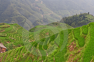 Guilin Rice Field Terrace Royalty Free Stock Photography - Image: 6198757