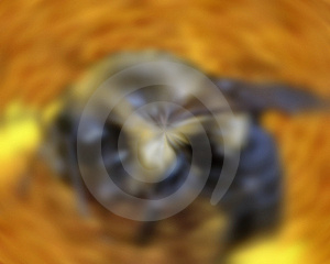 Bee In Motion Stock Image - Image: 626491