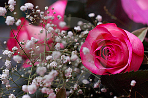 Pinky-white Rose In A Composition Stock Photography - Image: 6201192