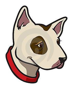 Bull Terrier Stock Image - Image: 6207411