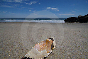 Crab Shell Royalty Free Stock Photos - Image: 6222658