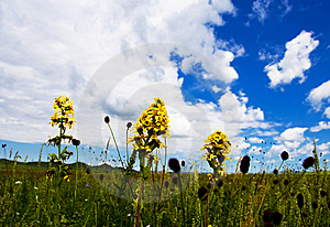 Meadow,blue Sky Royalty Free Stock Images - Image: 6231439