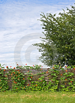 Rural fence with flowers Stock Image