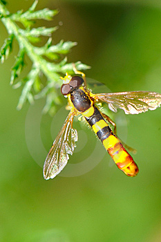 Fly Stock Photography - Image: 6240962