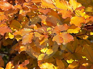 Autumn Leaves Stock Image - Image: 6241371