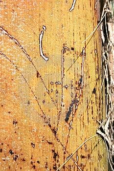 Palm Tree Stock Photos - Image: 6242243