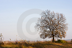 Autumn Scene Royalty Free Stock Photos - Image: 6247288