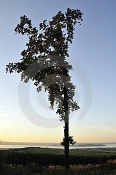 Large Tree Royalty Free Stock Image - Image: 6251716