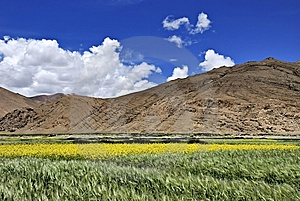 Blue Sky And Yellow Flowers Stock Images - Image: 6254714