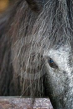 Minature Horse Side Profile Stock Photos - Image: 6260343