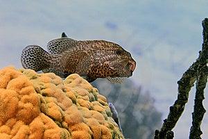 Grouper Stock Photos - Image: 6280383