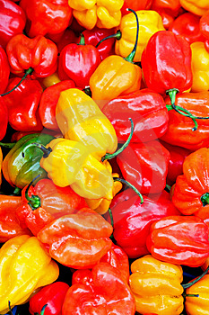 Chilli Paprika Royalty Free Stock Photos - Image: 6296118