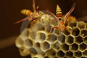 Wasps Stock Image - Image: 6299151