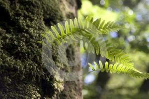 Fern Fronds Stock Photography - Image: 634932
