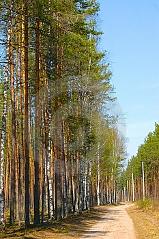 Road In The Forest Royalty Free Stock Images - Image: 6301429