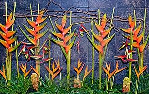 Arrangement Of Plants Stock Image - Image: 6306631