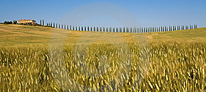 TUSCANY Countryside With Cypress And Farm Stock Photography - Image: 6309422