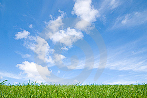Green grass, blue sky Stock Photography