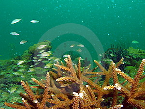 Coral Reef Royalty Free Stock Photography - Image: 6315947