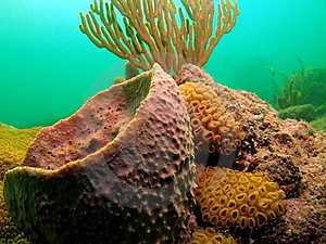 Coral Reef Stock Photos - Image: 6316053