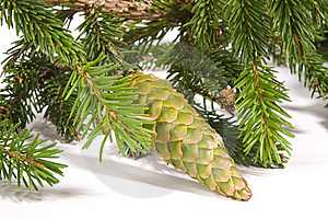 Fir Cones Royalty Free Stock Images - Image: 6322559