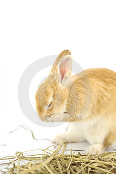 Rabbit Stock Photos - Image: 6323433
