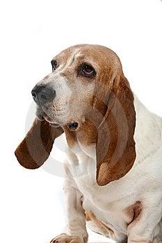 Slappe ontlasting hond