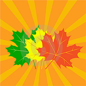 Autumn Maple Leaves Royalty Free Stock Images - Image: 6325299