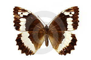 Beautiful Butterfly Royalty Free Stock Photo - Image: 6332825