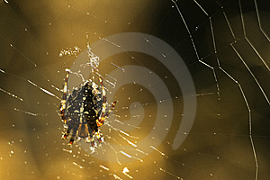 Spider On Web Stock Images - Image: 6339724
