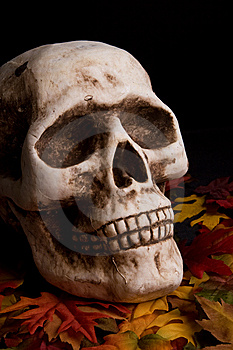 Halloween Skull Royalty Free Stock Images - Image: 6342489