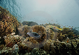 Coral And Fish Royalty Free Stock Photos - Image: 6354258