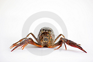 Lobster Stock Photography - Image: 6356522
