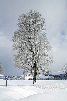 Frozen Tree Stock Photos - Image: 6358483
