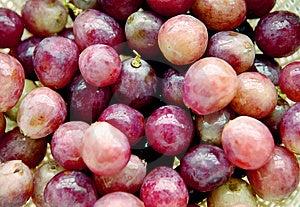 Purple Grapes Stock Photo - Image: 6372450