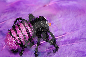 Spider Stock Photography - Image: 6382852