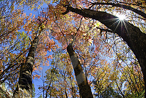Fall Trees And Sunlight Royalty Free Stock Photo - Image: 6384465