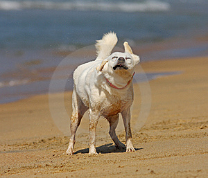 Dog Shaking Off Stock Images - Image: 6390644