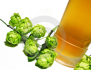 Beer And Hop-plant Stock Photography - Image: 6392452