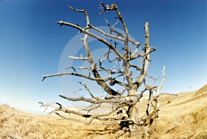 Summer Landscape With Alone Tree Stock Image - Image: 647471