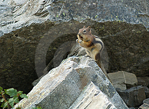 Chipmunk Up On Rock Royalty Free Stock Photo - Image: 6402035
