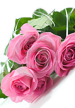 Five Pink Roses Royalty Free Stock Photos - Image: 6403388