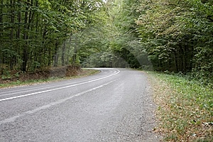 Road In The Forest Royalty Free Stock Image - Image: 6405436